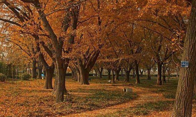 泰兴古银杏森林公园开放时间缩略图